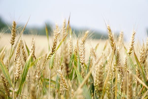 Coraz większy popyt na usługi rolnicze